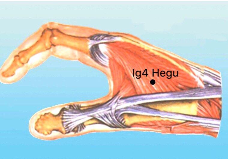 punto ig4 hegu anatomia