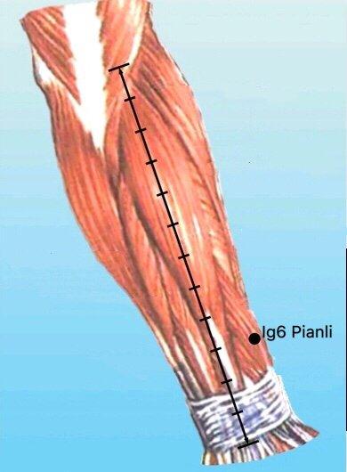 punto Ig6 pianli anatomia