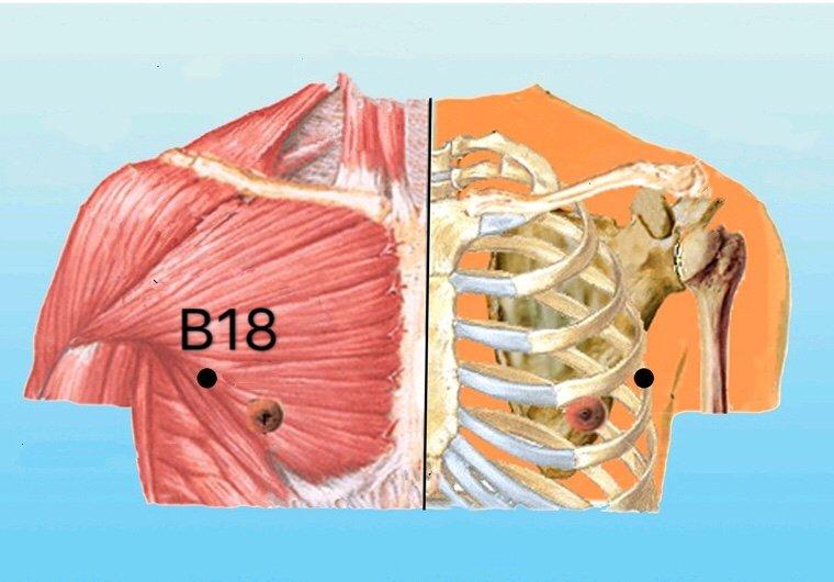 punto b18 tianxi anatomia