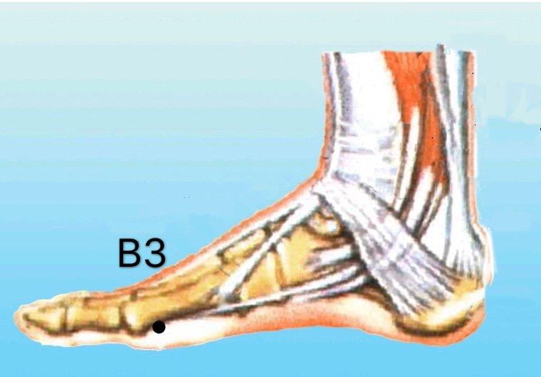 punto b3 taibai anatomia
