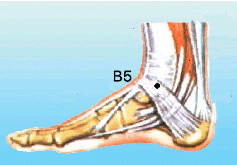 punto b5 shangqiu anatomia