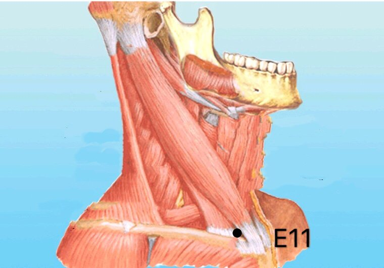punto e11 qishe anatomia