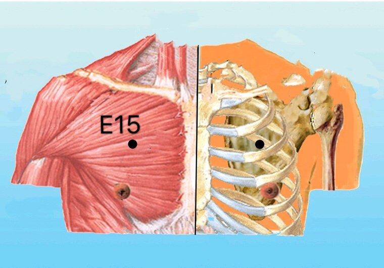 punto e15 wuyi anatomia