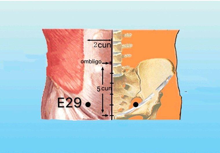 punto e29 guilai anatomia