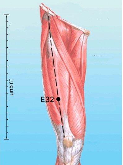 punto e32 futu anatomia