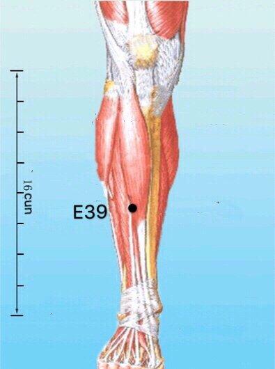 punto e39 xiajuxu anatomia