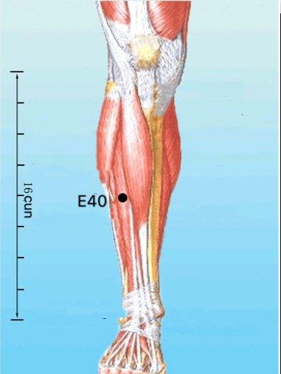punto e40 fenglong anatomia