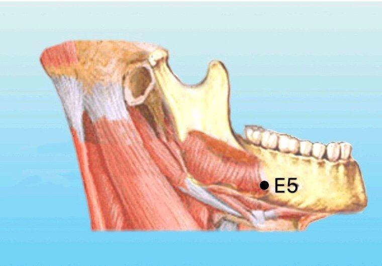 punto e5 anatomia