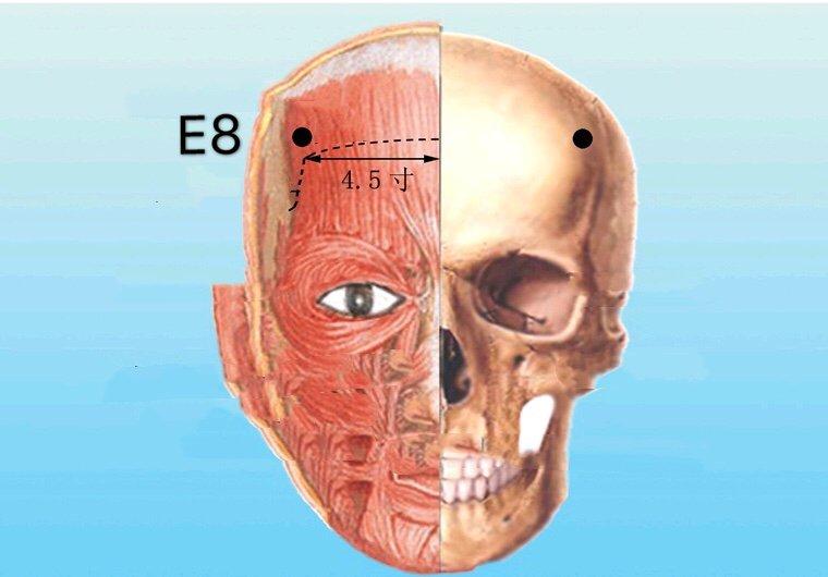 punto e8 touwei anatomia
