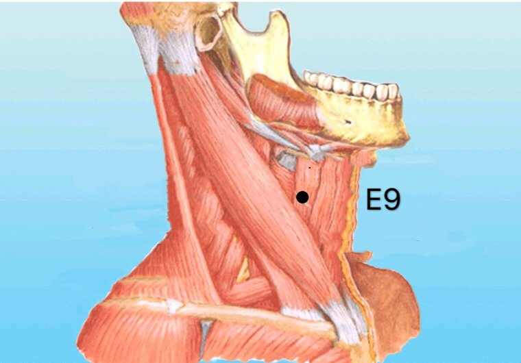 punto e9 renying anatomia