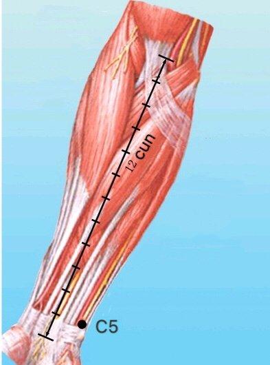 punto c5 tongli anatomia