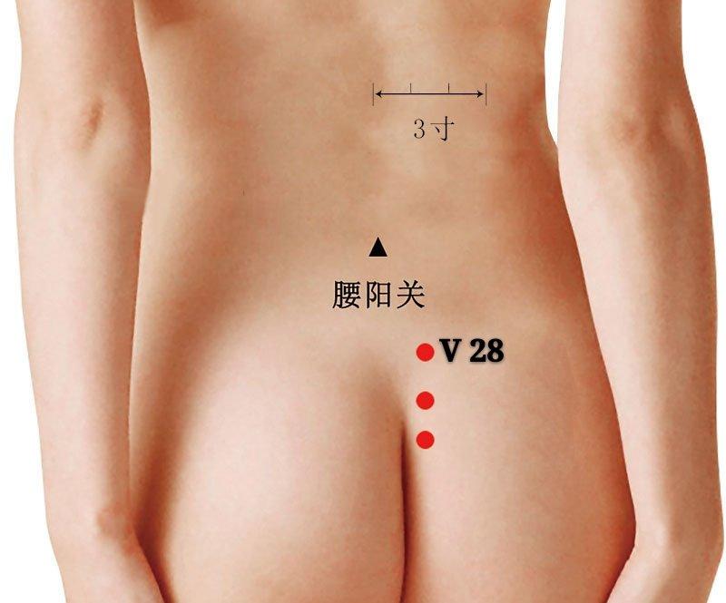 punto v28 pangguangshu