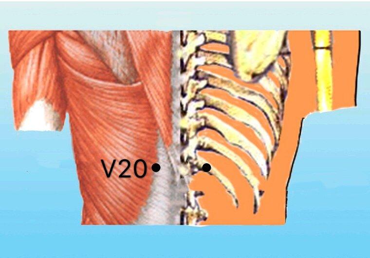 punto v20 pishu anatomia