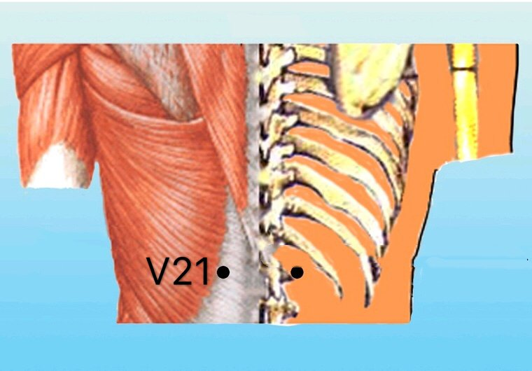 punto v21 weishu anatomia