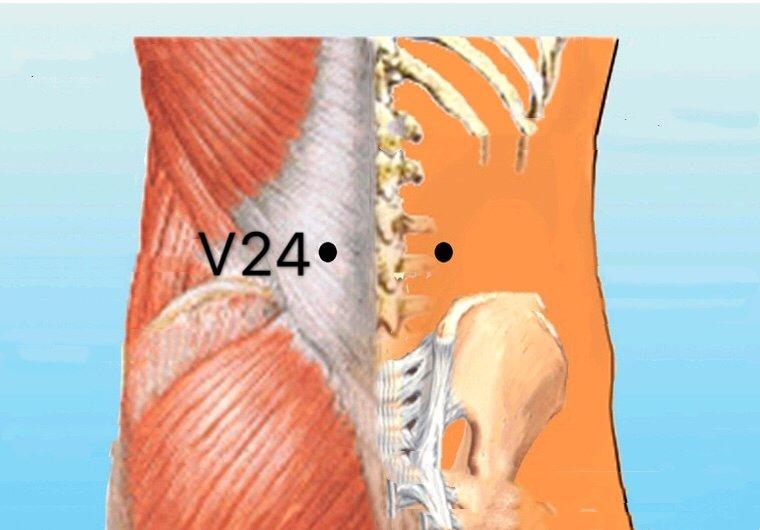 punto v24 qihaishu anatomia