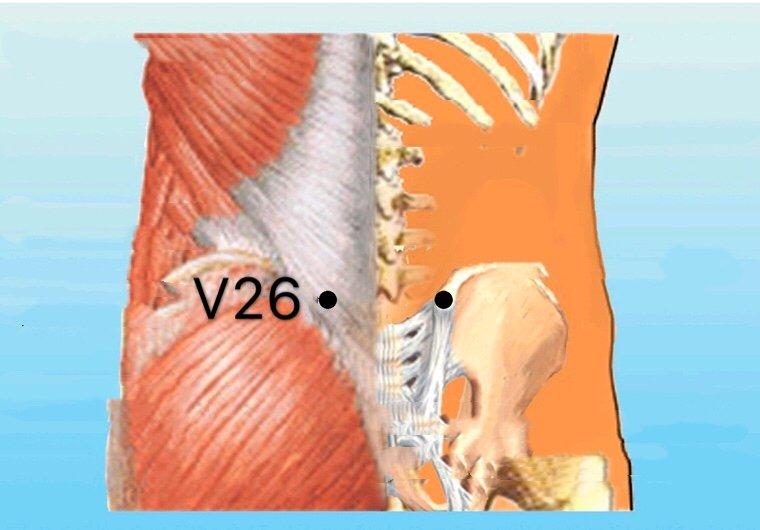 punto v26 guanyuanshu anatomia