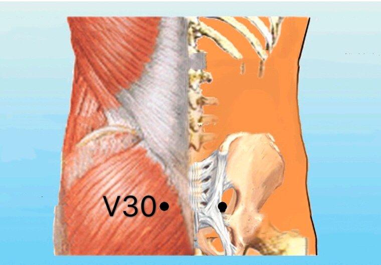 punto v30 baihuanshu anatomia