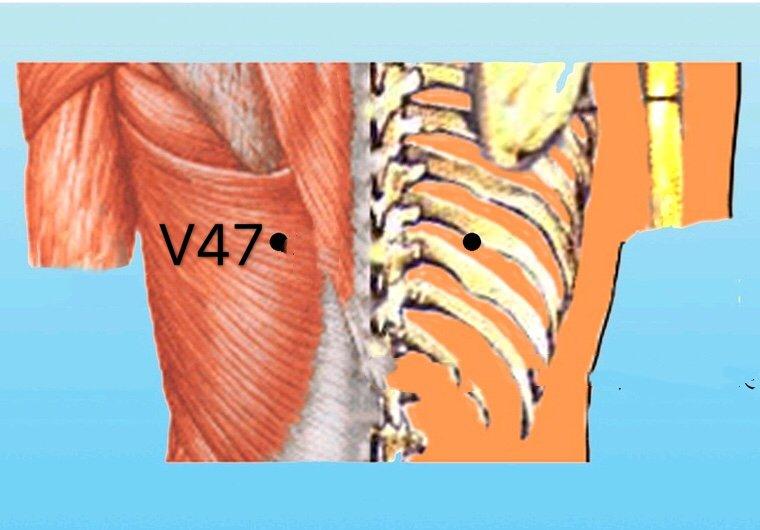punto v47 hunmen anatomia