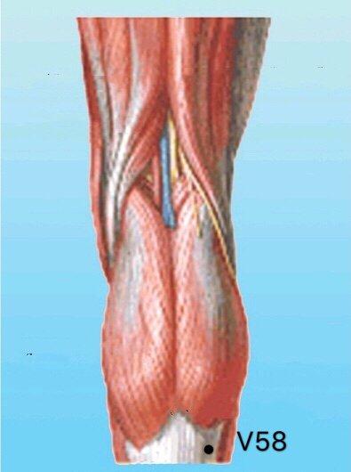 punto v58 feiyang anatomia