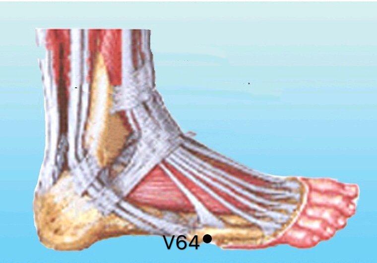 punto v64 jinggu anatomia