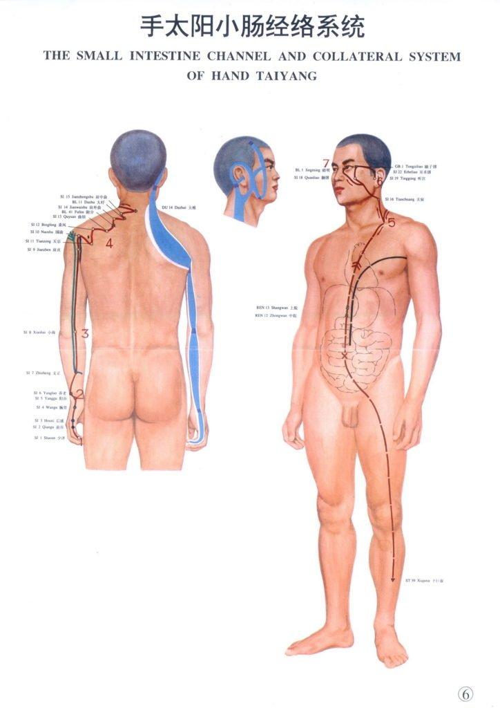 meridiano del intestino delgado