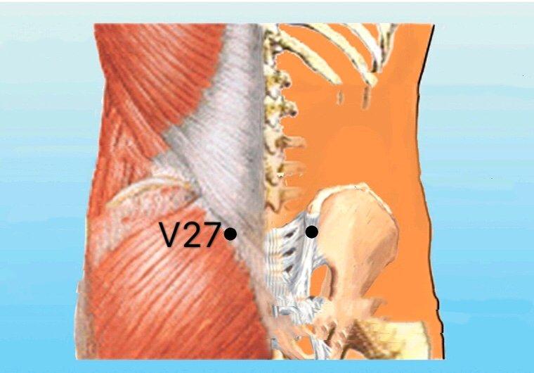 punto v27 xiaochangshu anatomia