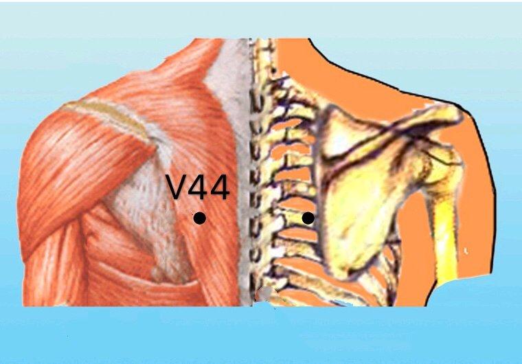 v44 shentang anatomia