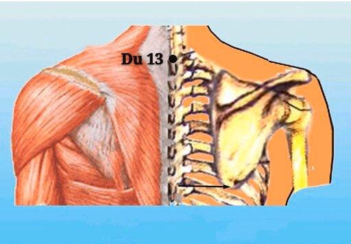 punto du13 taodao anatomia