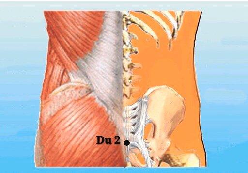 punto du2 yaoshu anatomia