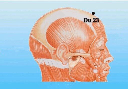 punto du23 shangxing anatomia