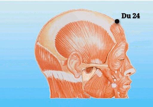punto du24 shenting anatomia