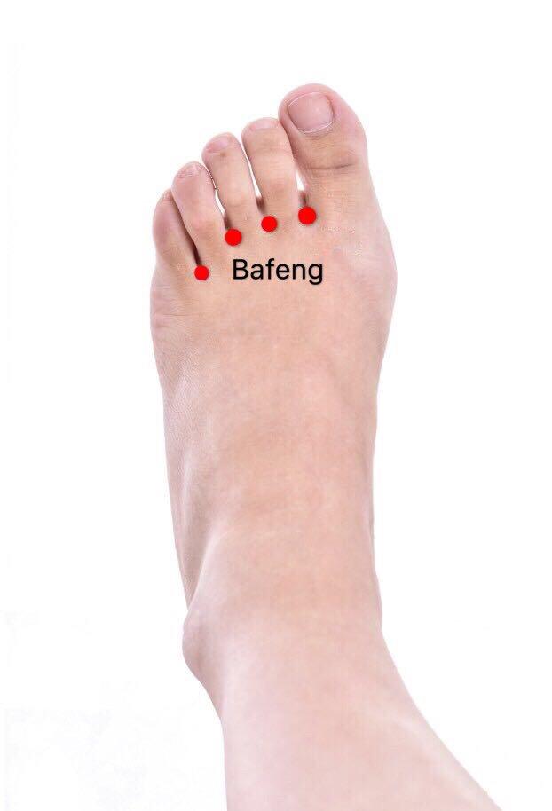ex-le10 bafeng