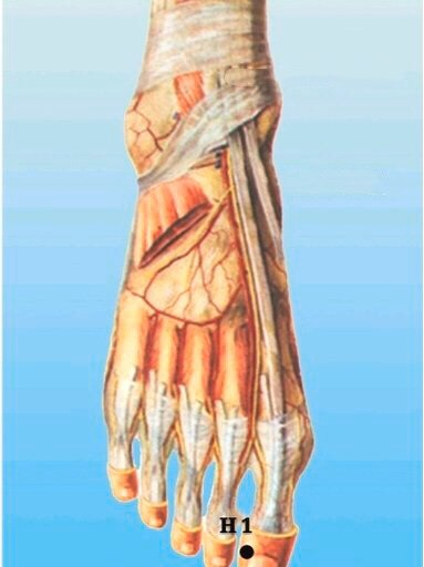 punto h1 dadun anatomia