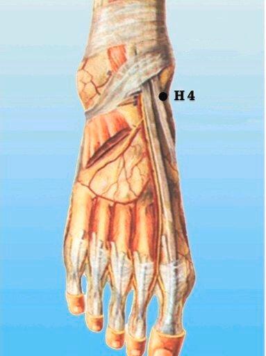 punto h4 zhongfeng anatomia