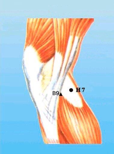 punto h7 xiguan anatomia