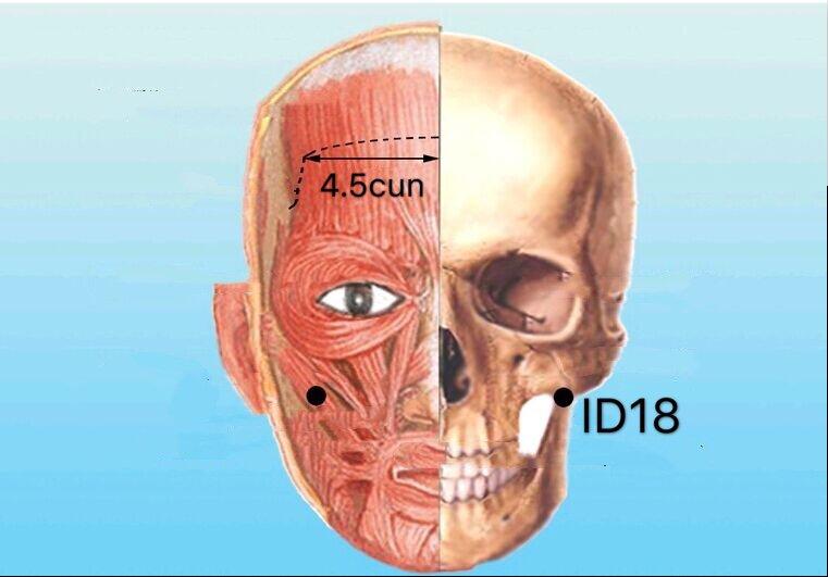 punto id18 quanliao anatomia