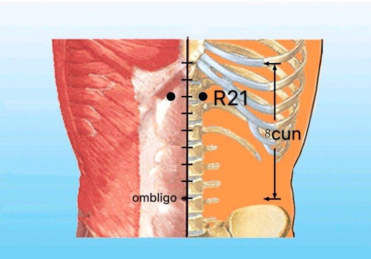 punto r21 youmen anatomia