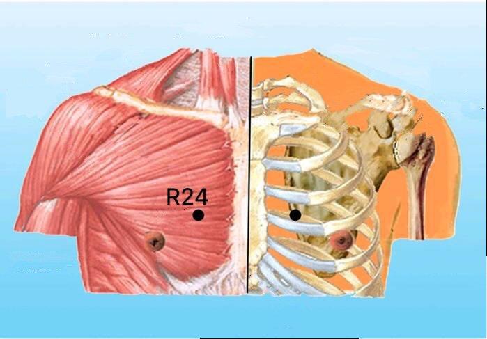 punto r24 lingxu anatomia