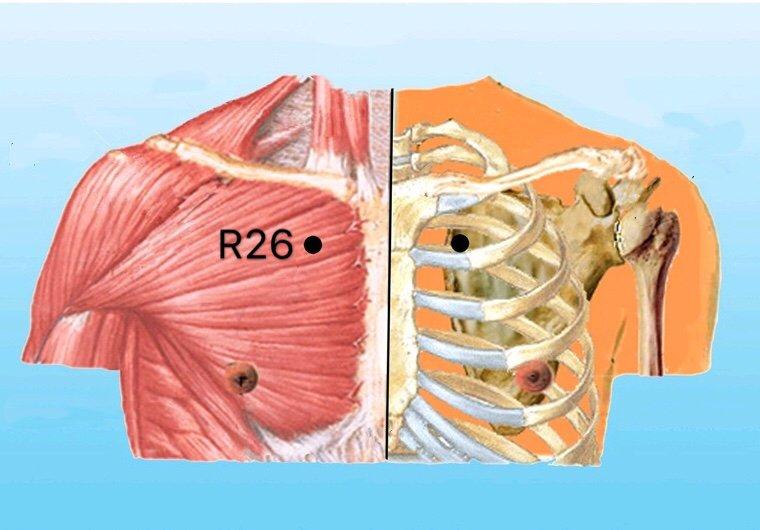 punto r26 yuzhong anatomia