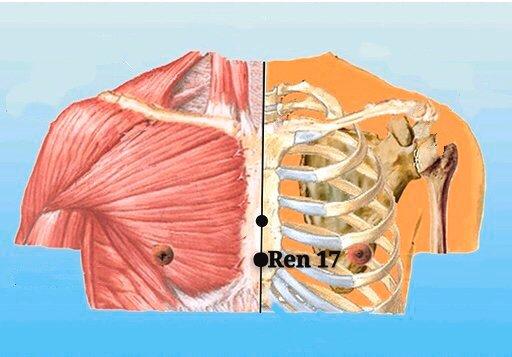 punto ren17 danzhong anatomia