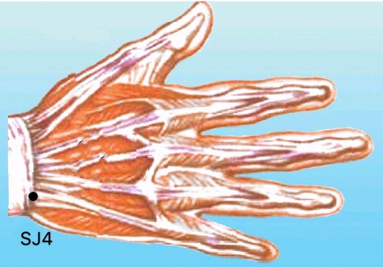 punto sj4 yangchi anatomia