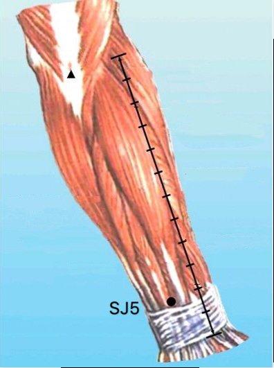 punto sj5 waiguan anatomia