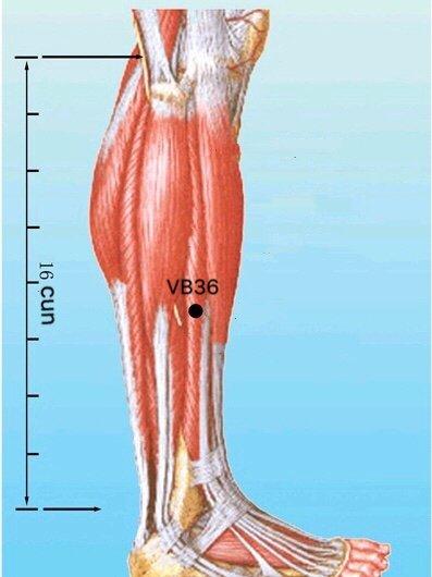 punto vb36 waiqiu anatomia