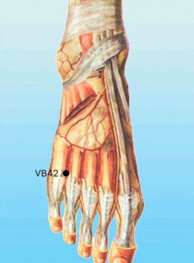punto vb42 diwuhui anatomia