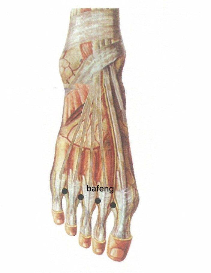 punto anatomica bafeng