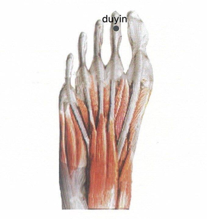 punto anatomica duyin