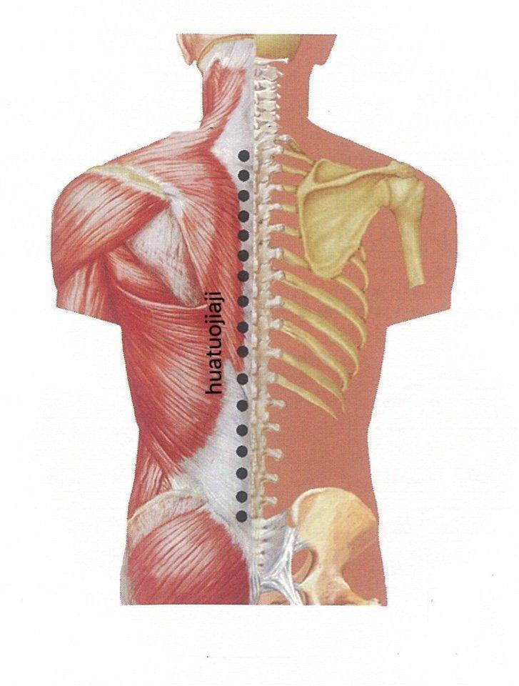 punto anatomica huatuojiaji