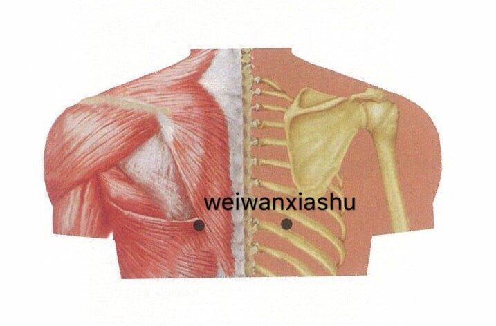 punto anatomica weiwanxiashu