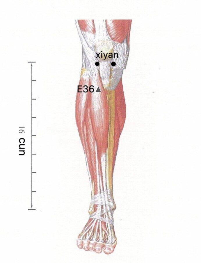 punto anatomica xiyan