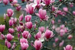 flor xin yi